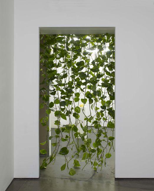 rideaux de plantes