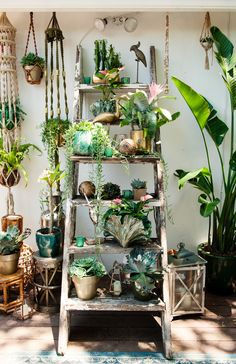 agencement plantes