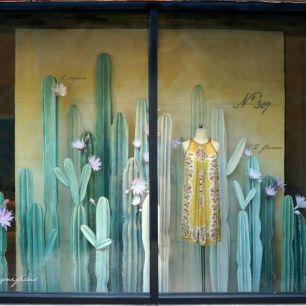 vitrine cactus