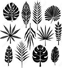 feuilles de palme