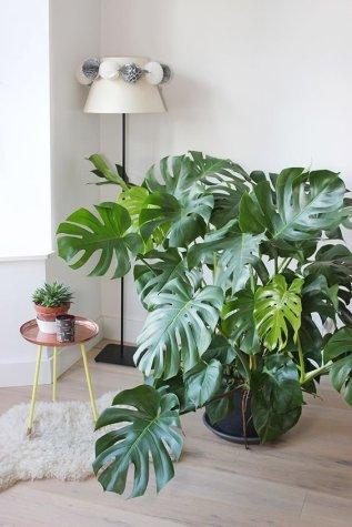 plantes graphiques