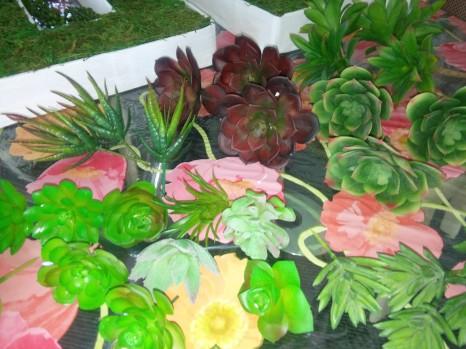 sélection plantes grasses