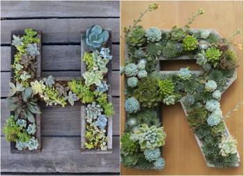 lettre plante