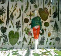 vitrine nature
